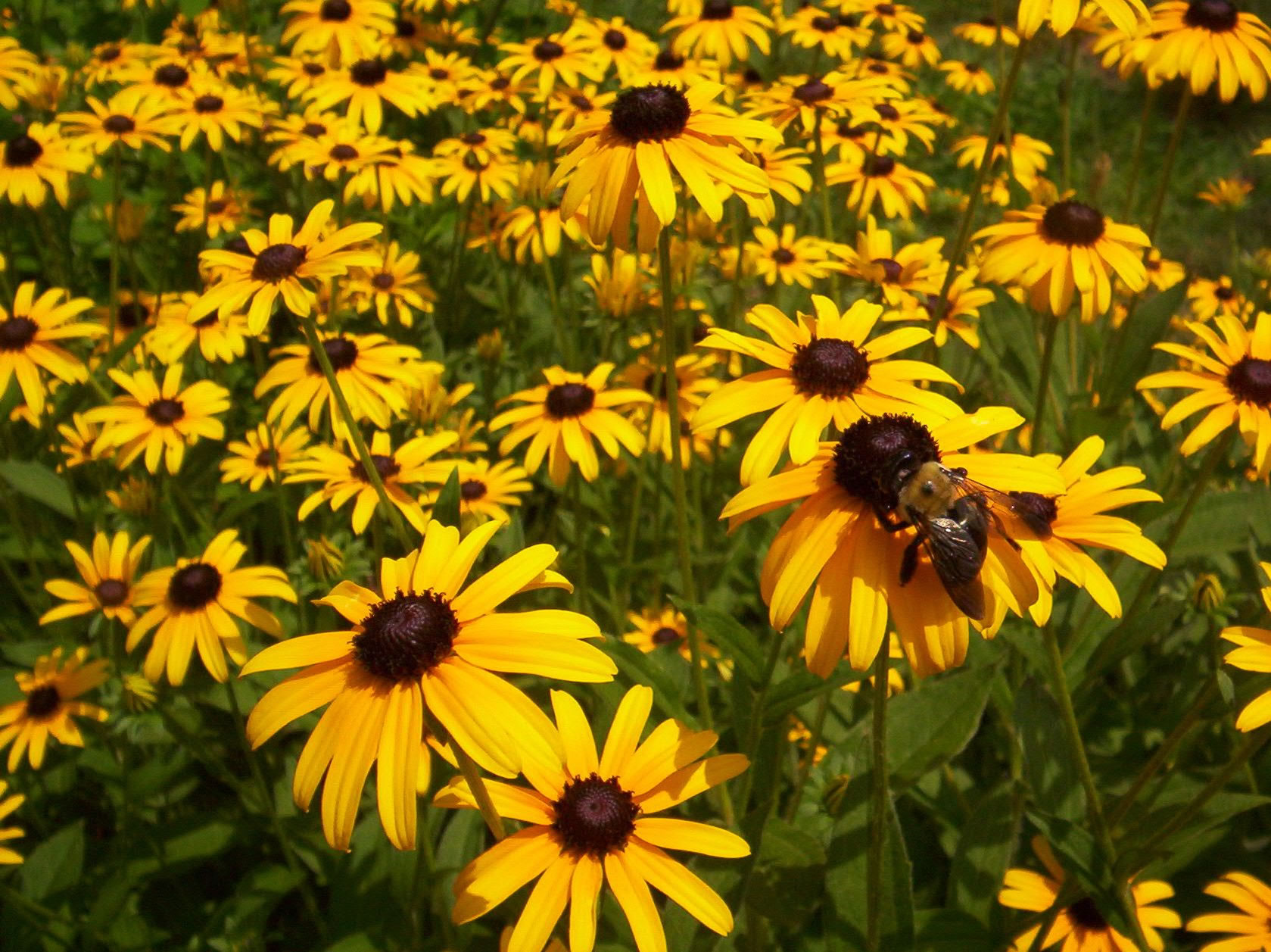 consider native plants this spring