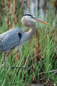Heron - Kalamazoo River Watershed Counil Mission & Vision