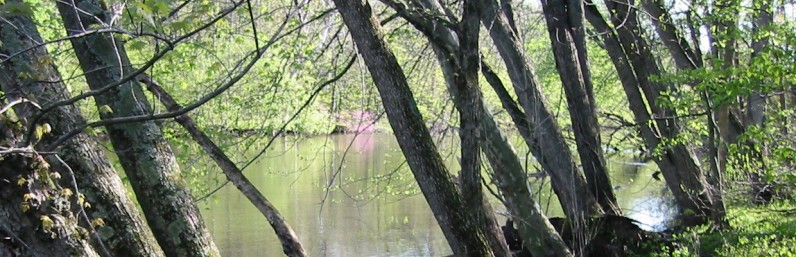 Kalamazoo River Leaning Trees