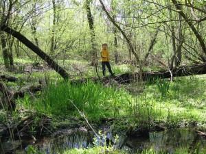 Wetland Loss